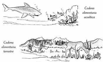 cadenas alimentarías acuáticas y terrestres