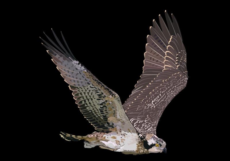 Clasificación: 362. Naturaleza. Animales vertebrados. Aves.