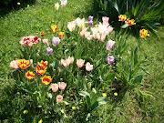 Fiori, fiori e ancora fiori (img )