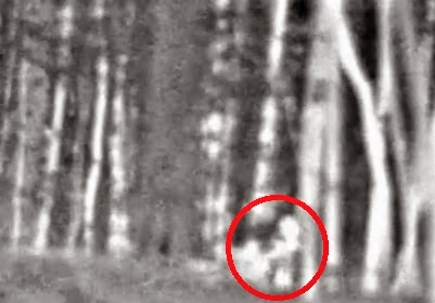 Thermal Image Bigfoot