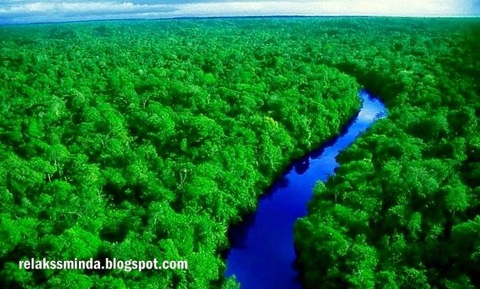 Jenis-Jenis Hutan Di Malaysia - Hutan Paya Gambut