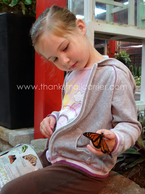 holding butterfly