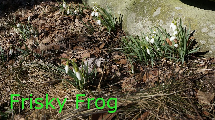 frisky frog