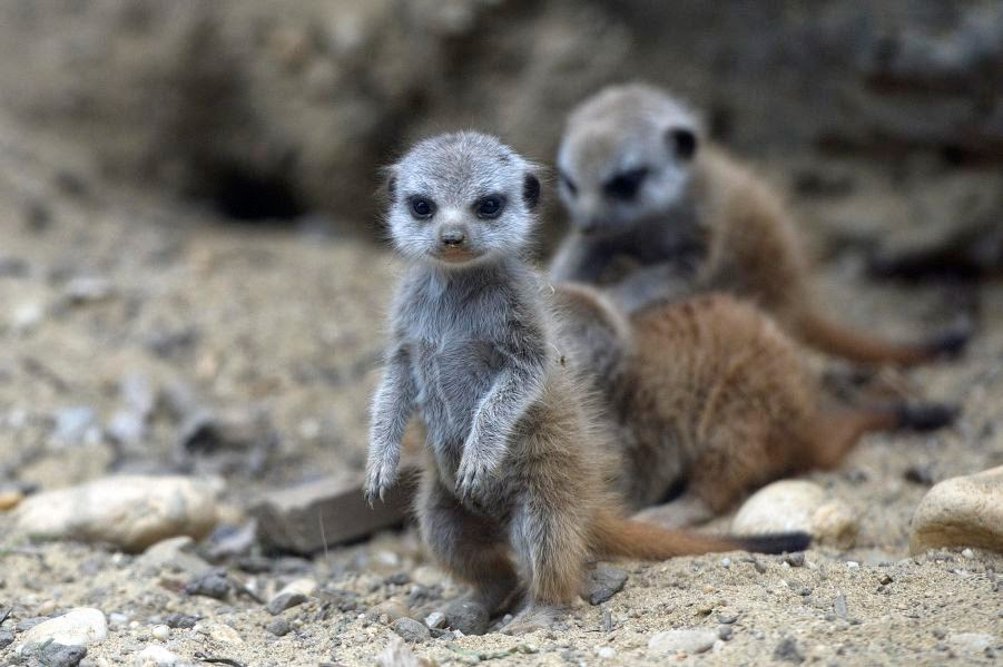 The 30 Cutest Animals Ever Seen