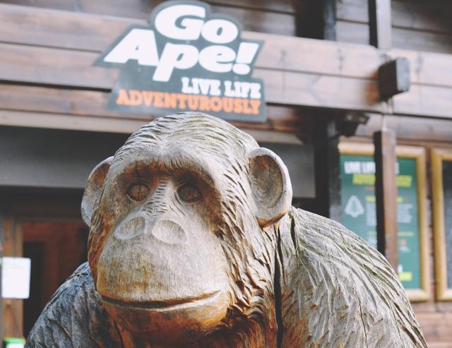 Go Ape Experience