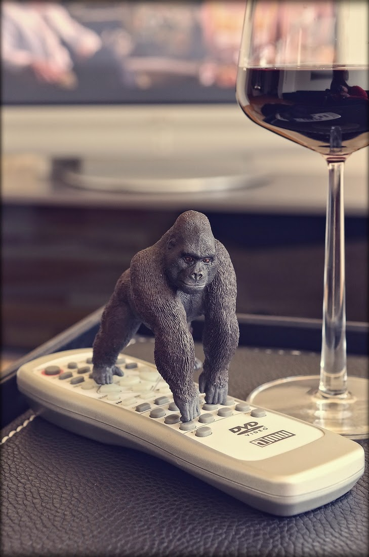 12-Gorilla-Bettina-Güber-Unusual-Miniature-Animal-Pets-Photography-www-designstack-co