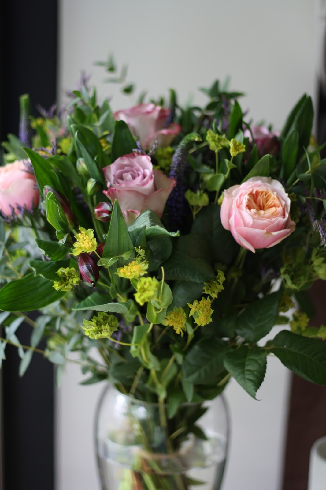 How to take care of roses -  Family Who Prefer Plants Over Bouquets They Have Them Too I Know My Nan Would Probably Prefer A Good Plant That She Can Take Care Of And Watch Grow