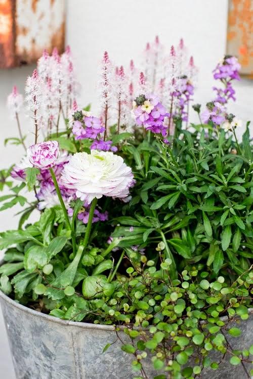 Samplanteringsväxterna