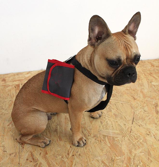 outfit trend tchibo hund erstehilfe snackbox Hundepolster Hundebett französiche Bulldogge Husky