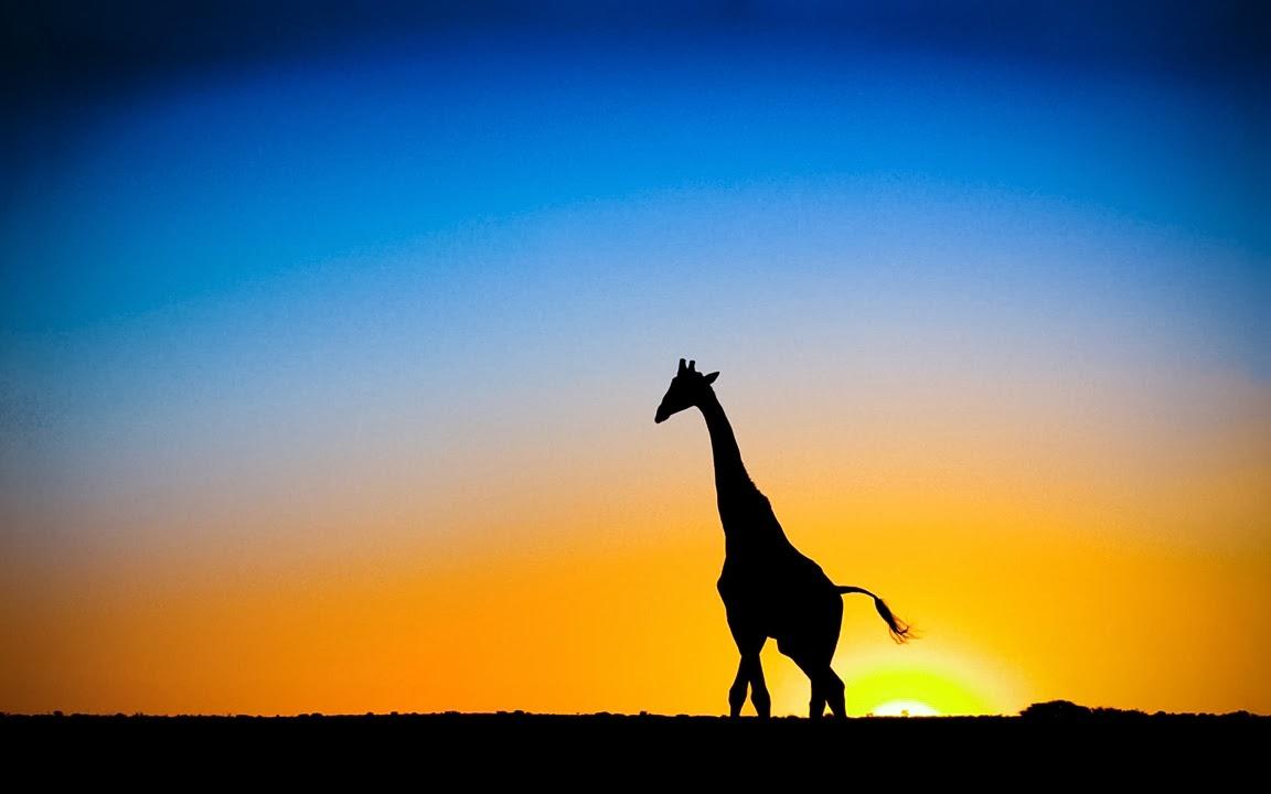 Mi piaci perchè sei il più alto mammifero tra tutte le specie di animali terrestri viventi