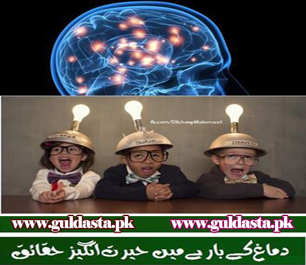 parts of brain in urdu, brain booster urdu, tips for healthy brain in urdu, brain tumor in urdu, How much sleep you need Urdu, Exercises to Strengthen Your Brain in urdu, Improve Your Brain By Exercise in Urdu, Health Tips in Urdu For A Healthy Mind and Body