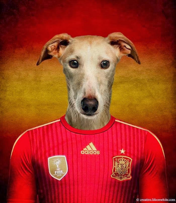 Spain – Spanish Galgo