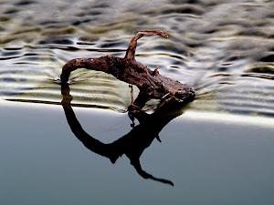 El Agua en Cantabria