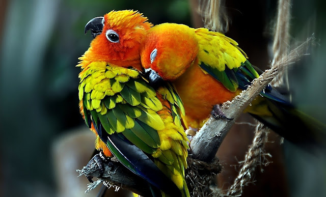 Beautiful Birds HD Wallpapers Free Download
