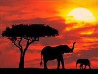 Kenya - 2011