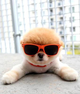 Cool Pomeranian