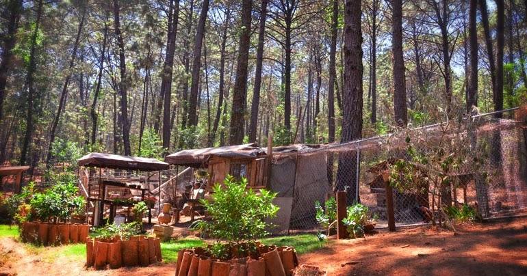 Caba as en mazamitla aldea el lugar de los arc ngeles for Viveros en jalisco