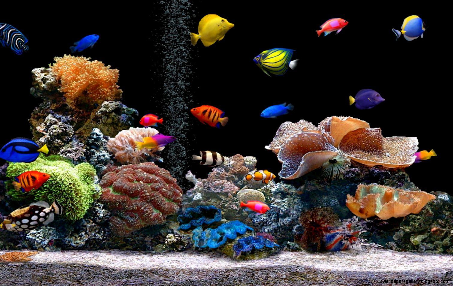 Tropical fish tank wallpapers wallpapers gallery for Desktop fish tank