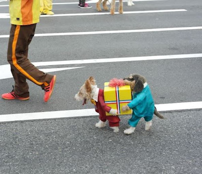 Cutest dog costume looks like two dogs carrying a present.