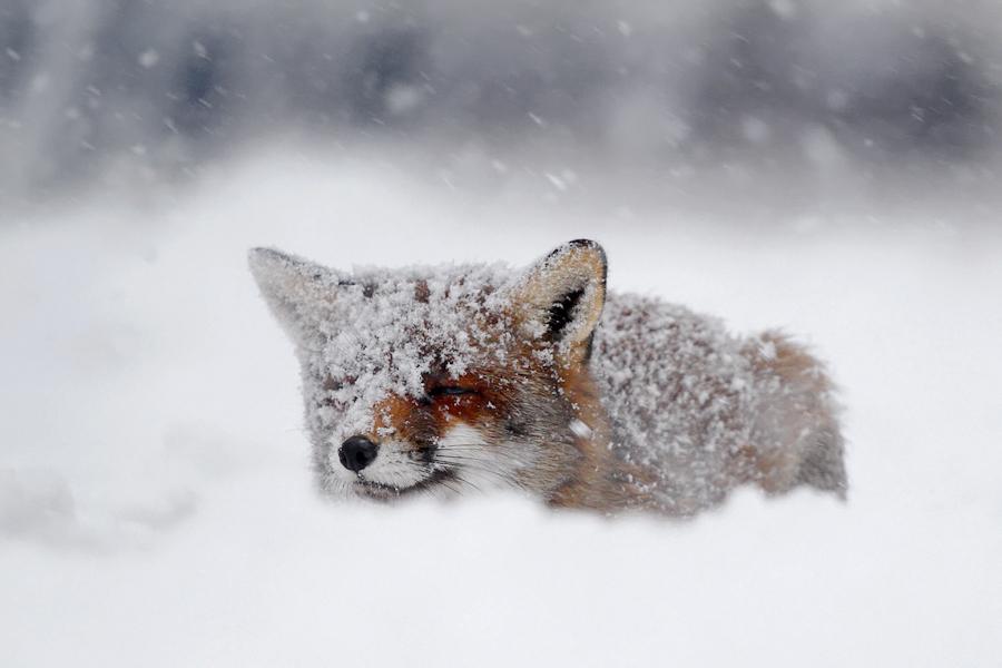 winter season Shots