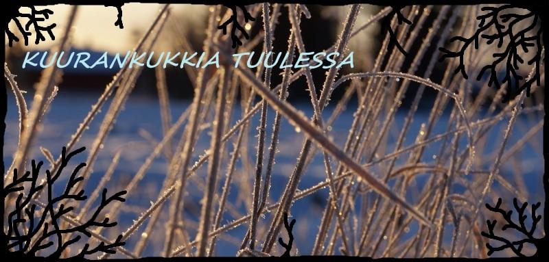 Kuurankukkia Tuulessa