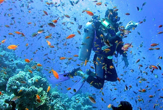 sea garden, underwater sports, scuba diving
