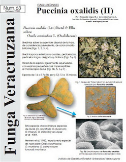Puccinia oxalidis (II) Fungi: Uredinales