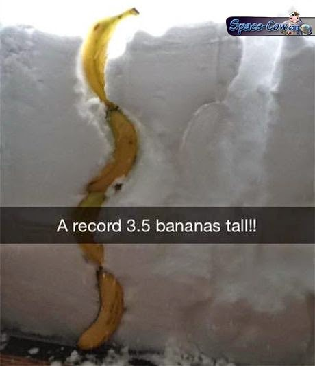funny bananas snow picture