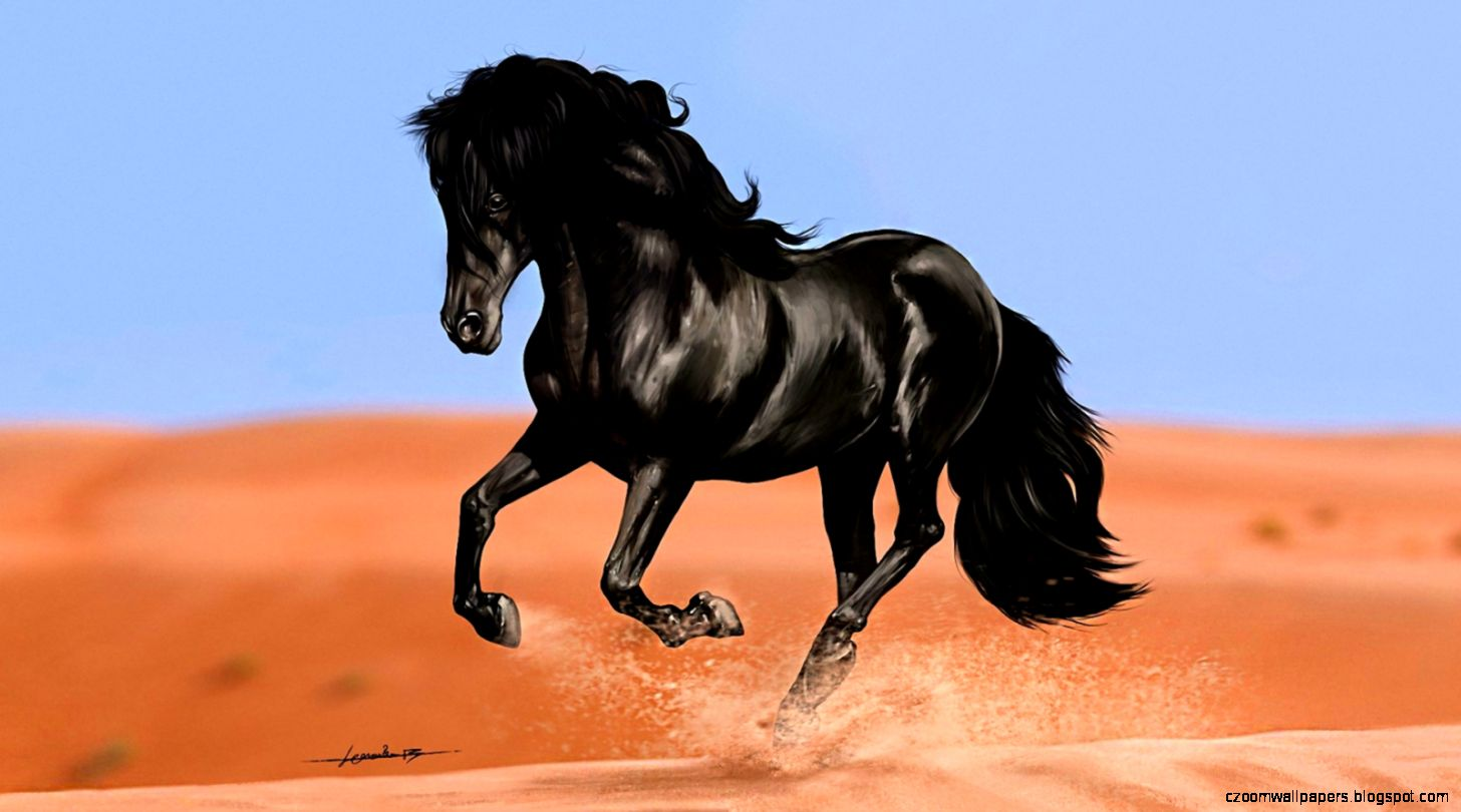 Black Horse HD Wallpapers  Black Horse Images  Cool Wallpapers