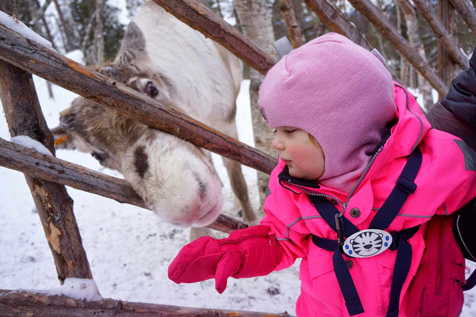 toddler feeding reindeer
