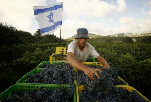 """La route des vins en Israël : """"Sur les pas du Baron de Rothschild"""""""