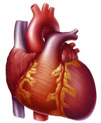 Berbagai jenis penyakit pada jantung yang perlu anda ketahui