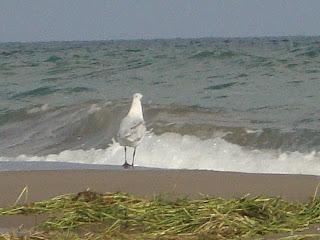 El Serrallo beach white bird