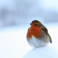 Invierno...