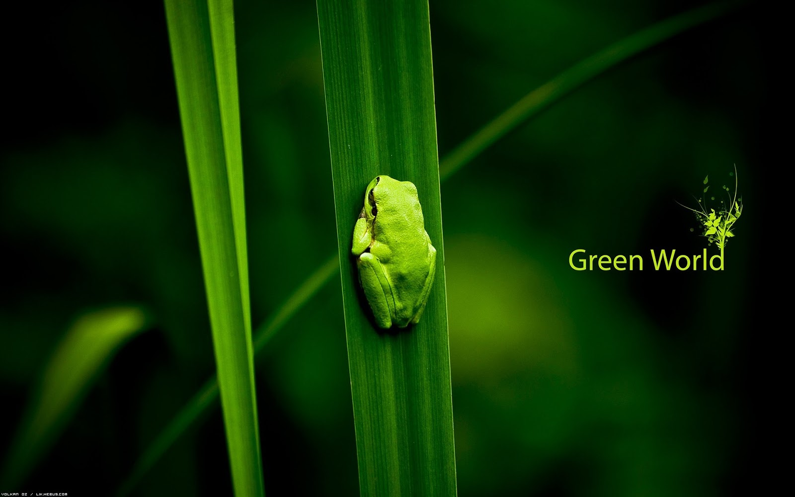 http://3.bp.blogspot.com/-FKIrOwN-KaU/Tlme1Xk5H2I/AAAAAAAAIdc/Z8afxkTEjAw/s1600/green_world-1920x1200_little_frog_HD_wallpaper.jpg