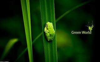 Little Cute Green Tree Frog Plants Eco Challenge Clean Fresh HD Wallpaper