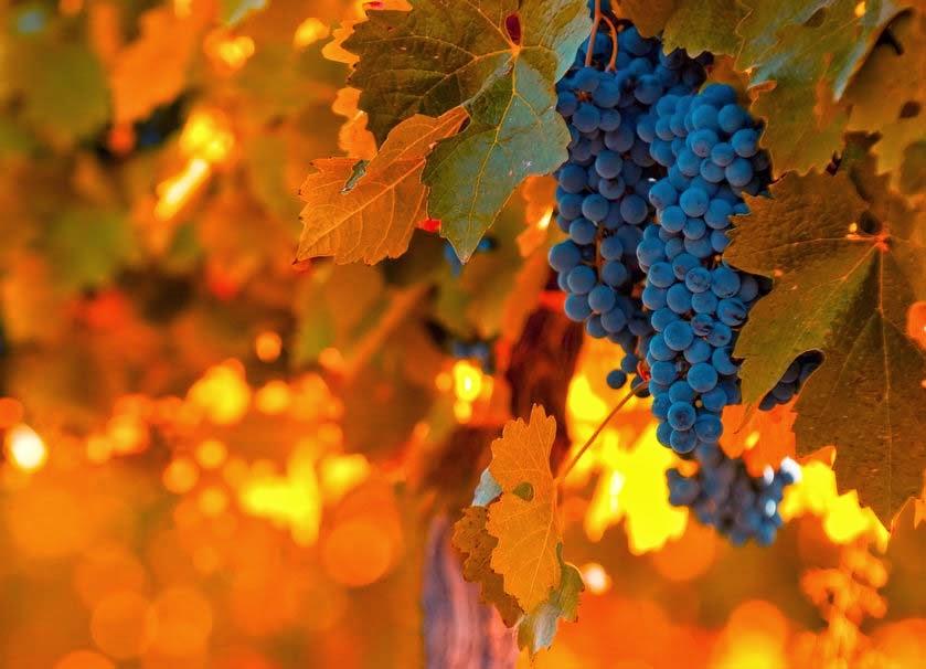 food-blue-light-orange-grapes