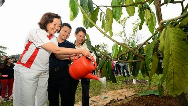 Dr Lee Bee Wah with Mr Desmond Lee and NParks CEO Kenneth Er planting a tree at the Springleaf Nature Park.