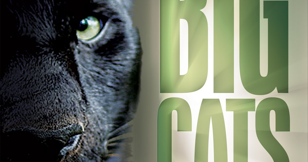 Breeding Cats Book Australia