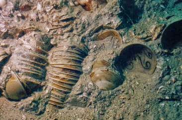 Belitung Shipwreck 2