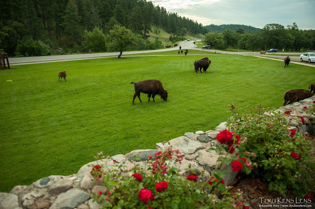 The State Game Lodge front lawn