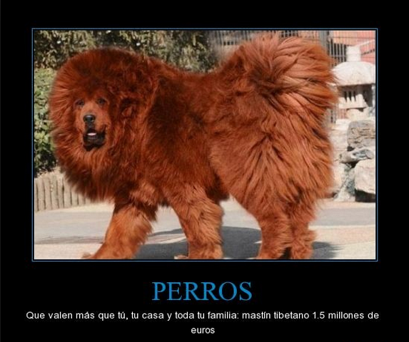 Hace al rededor de 5 años, un cachorro tenía el costo de mas o menos ...: www.vacionesdeimagenes.com/2013/08/el-perro-mas-caro-del-mundo.html
