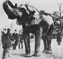 الفيل جامبو