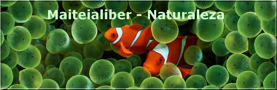 MAITEIALIBER - NATURALEZA. Descarga de libros y documentales de naturaleza