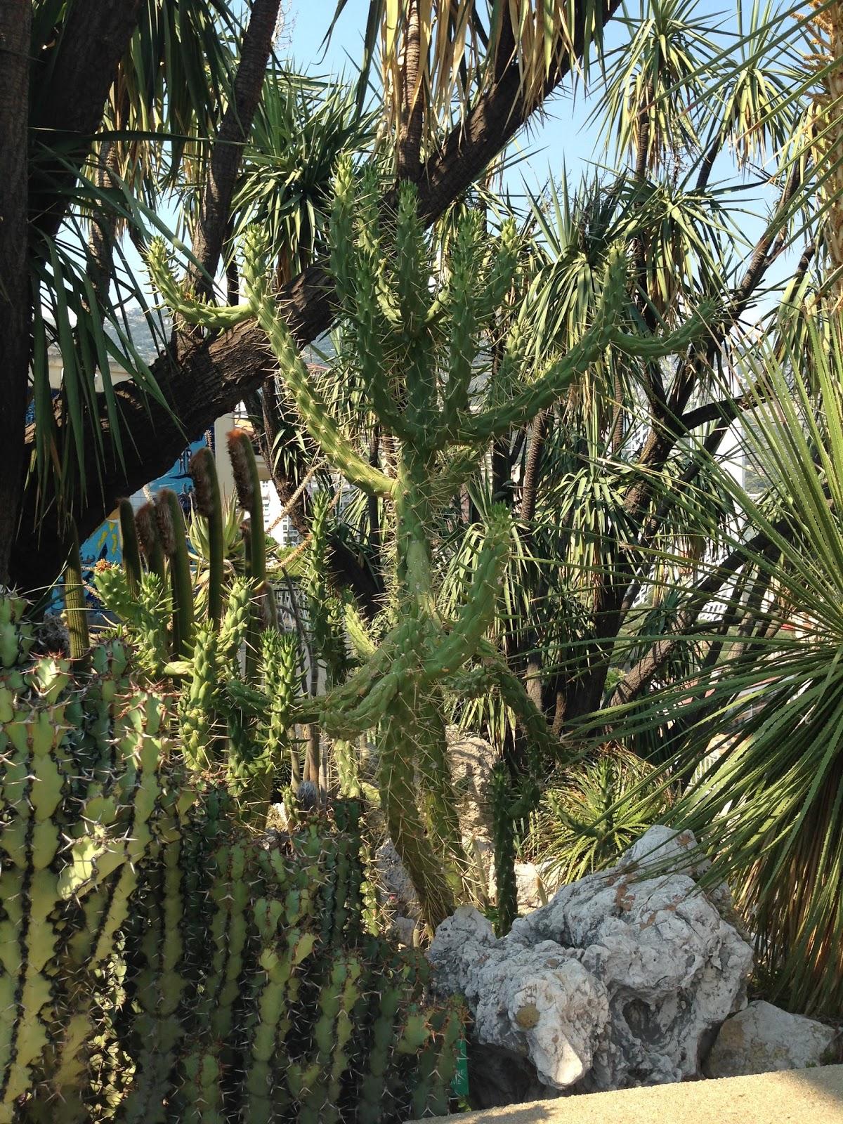 Succulent sundae jardin exotique monaco part 7 for Jardin exotique