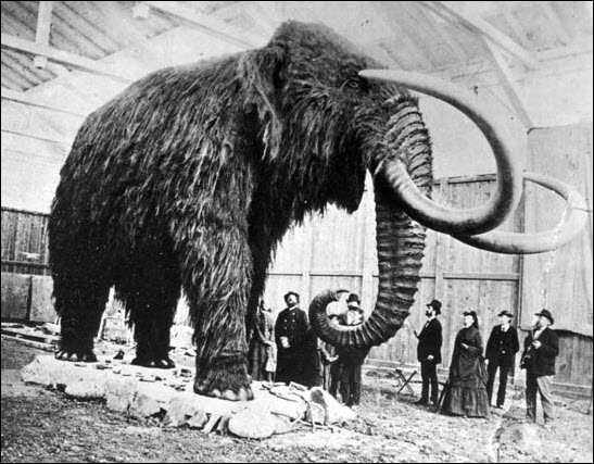 Most Amazing Extinct Land Animals Woolly Mammoth
