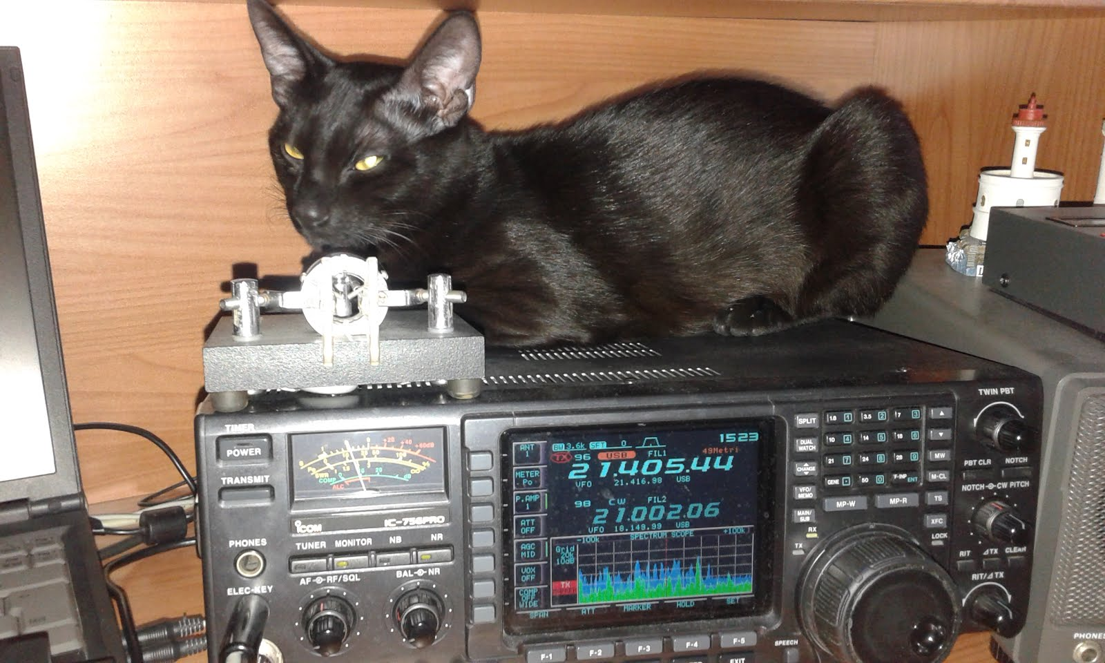 DX Cat