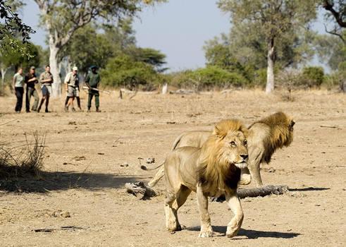 Tanzania Giraffe Safaris Limited