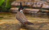 Aves muy lindas del paraíso (7 pajarillos de colores)