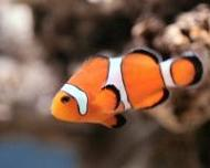 inglés para niños fish swimming